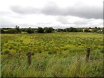 H5559 : Rushy field, Garvaghy by Kenneth  Allen