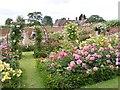 SJ7904 : Rose Scene by Gordon Griffiths