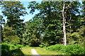 SU3006 : Path into Park Ground Inclosure by David Martin