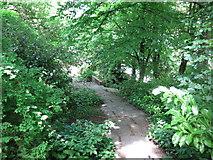 NZ2564 : Shaded path near All Saints Church by Mike Quinn