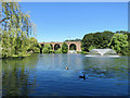 TL7006 : Chelmsford: viaduct, ducks and fountains by John Sutton