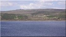NN6665 : Woodland, Loch Errochty by Richard Webb