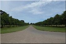SE5158 : Beningbrough Hall drive by DS Pugh