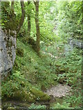 SD9163 : View from Janet's Foss near Malham by pam fray