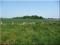 TG0604 : Brickkiln Grove, from the west by Christine Johnstone