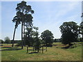 TL2152 : Scots pine trees off the Bedfordshire Greensand Ridge route at Tetworth by Peter S