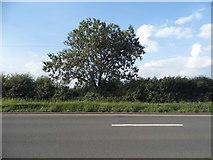SP1655 : Alcester Road, Drayton by David Howard