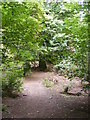 SO8891 : Himley Wood path by Gordon Griffiths