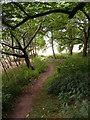 SO8891 : Himley Woodland Path by Gordon Griffiths