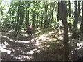 SO7594 : Woodland Path by Gordon Griffiths