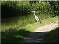 SO8595 : Heron View by Gordon Griffiths