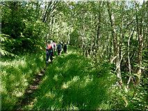 NH7276 : Strath Rory path beside the fields of Scotsburn House by Julian Paren