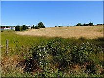 H5375 : Oxtown Townland by Kenneth  Allen