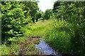 NY4888 : Former Waverley line near Newcastleton by Jim Barton
