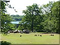 SE4017 : Lawnmowers at Nostell Priory by Alan Murray-Rust