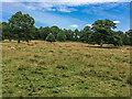 SE2912 : Grazing land by Ian Capper