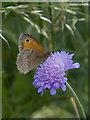 SE9857 : Butterfly near Elmswell, E Yorks by Paul Harrop