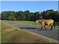 SU2607 : New Forest Pony on the road by Hugh Venables