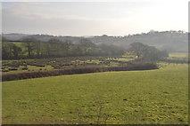 SX5857 : Rough grazing by N Chadwick