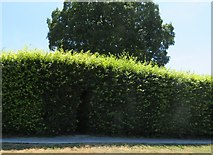 ST5038 : Narrow tunnel in the hedge by John C