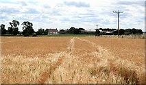 SE3970 : Ripening crops Town End Fields by Gordon Hatton