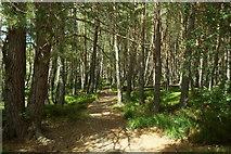 NH9718 : Path near Loch Garten, Abernethy Forest by Mike Pennington