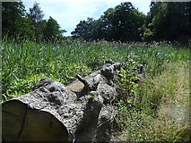 SE2712 : Yorkshire Sculpture Park: boggy patch next to the Upper Lake by Rudi Winter