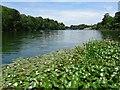 SP4315 : The Lake, Blenheim Park by Philip Halling