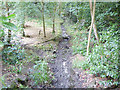 SE3338 : Dry stream in Ram Wood, Roundhay Park by Stephen Craven