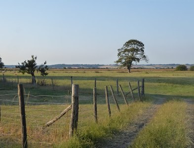 TR0628 : Marshland pasture north of St Mary in the Marsh by Stefan Czapski