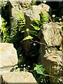 SP0513 : Ferns among the hypocaust at Chedworth Roman Villa by Steve Daniels