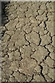 SP0135 : Dry cracked earth by Philip Halling