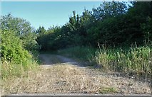 TR1164 : Track by Thanet Way near Whitstable by David Howard