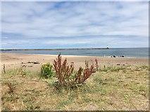 NU0052 : Calm Sea at Spittal Beach by Jennifer Petrie