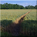 TM4066 : Footpath across wheat field by Ian Taylor