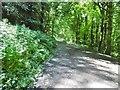 D3014 : Glenarm, woodland walk by Mike Faherty