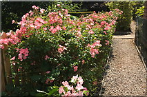 SX9364 : Roses, Kent's Cavern by Derek Harper