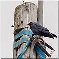 NH5963 : Jackdaw - Storehouse of Foulis by valenta
