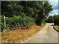 TQ4627 : Driveway and footpath, Ashdown Forest by Malc McDonald