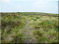 SE0314 : Path on Cupwith Hill Moss, Marsden by Humphrey Bolton