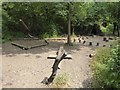 ST5326 : Natural Play Area at Lytes Cary Manor by Oliver Dixon