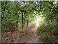 SO9390 : Steep Park Footpath by Gordon Griffiths