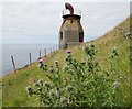 NR5808 : Thistles by the foghorn by James T M Towill
