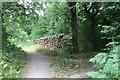 TQ0229 : Log Pile at Wephurst Wood by Chris Thomas-Atkin