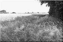 SJ7283 : Hulse Heath by Richard Webb