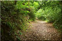SX8963 : Old Paignton Road by Derek Harper
