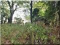 TM5184 : Overgrown pillbox opposite Benacre church by Helen Steed