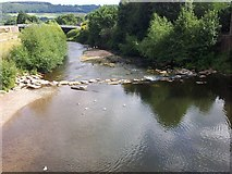 SO5012 : Monmouth - River Monnow - looking downstream by Rob Farrow