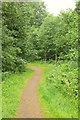 ST1880 : Paths, Roath Park Wild Gardens by Derek Harper