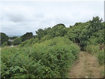 SX6845 : Bracken by Avon Estuary Walk at Stadbury by David Smith